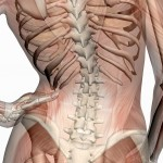 Pelvic Alignment and Neck Pain